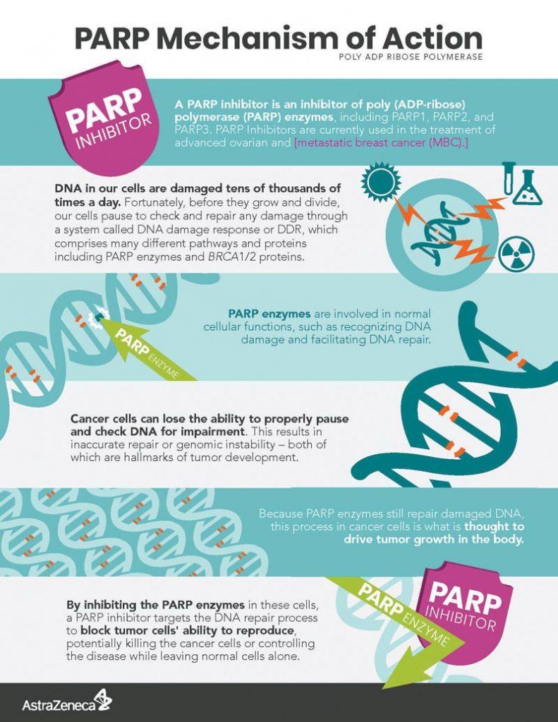 PARP_Infographic